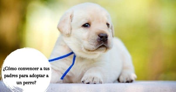 adoptar a un perro