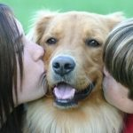 ¿Le gusta a los perros que los besen?