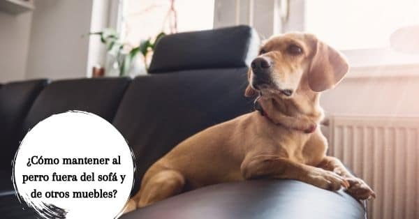 evitar que tu perro se suba al sofá