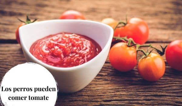 los perros pueden comer salsa de tomate
