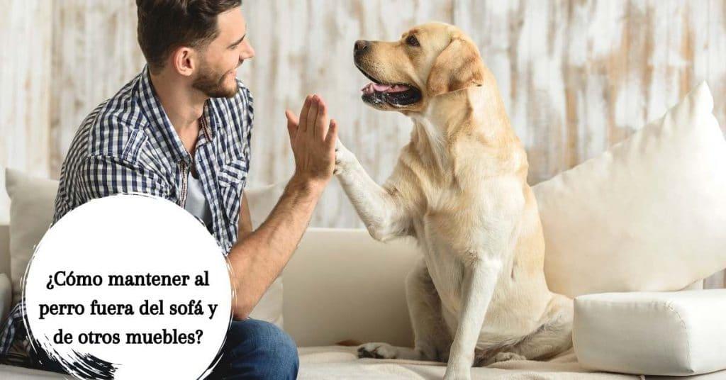 mantener al perro fuera del sofá