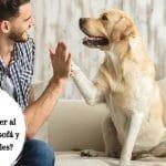¿Cómo mantener al perro alejado del sofá?
