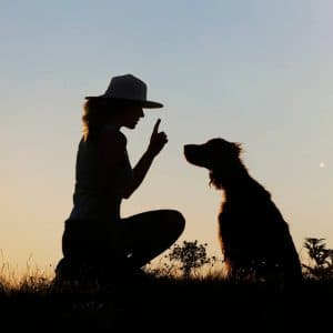 centro especializado en Adiestramiento Canino