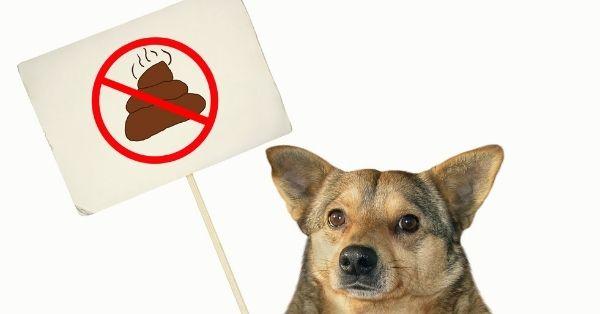 evitar que un perro coma caca
