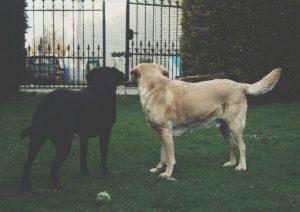 entrenar ladrido perro