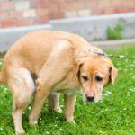 ¿Por qué los perros comen caca? ¿Cómo evitarlo?