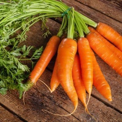 Beneficios zanahoria para perros