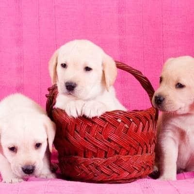 A qué edad se pueden separar los cachorros de la madre