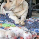 Cachorros de 6 semanas - Preguntas y respuestas