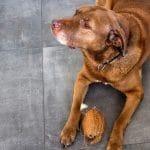 ¿Cómo alimentar a tu perro senior?