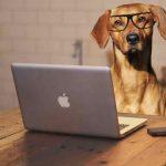 Cómo evitar que tu cachorro gruña mientras come