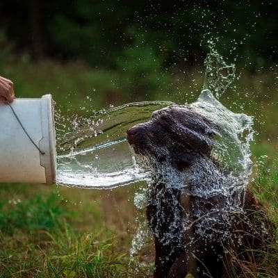 Cuánta agua debería beber mi perro al día