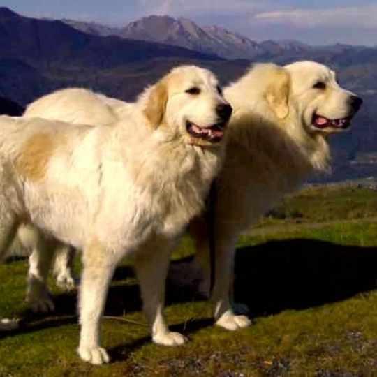Historia del Gran Pirineo