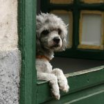 ¿Tienen los perros noción del tiempo?