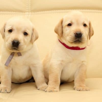 Vinculación con dos cachorros