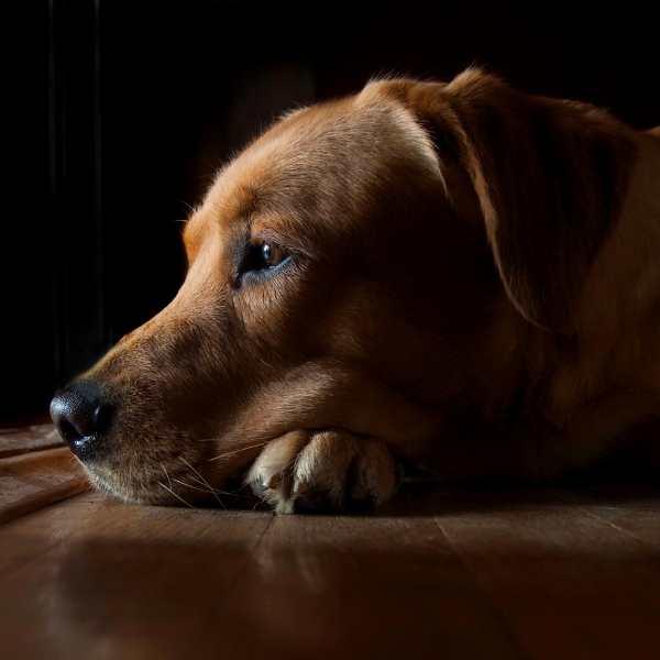 evitar que perro ladren por la noche